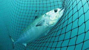 Your 5 Top Tips for Sustainable Fishing