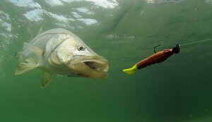 How to make your own fishing baits